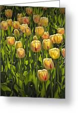 Yellow Tulip Flowers On Windmill Island In Holland Michigan Greeting Card