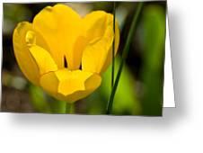 Yellow Tulip Greeting Card