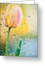Yellow Tulip Reflecting In Water Drops Greeting Card