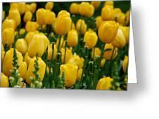 Yellow Tulip Sea Greeting Card