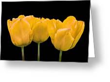 Yellow Tulip Triple Greeting Card