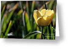 Yellow Tulip With Dew Greeting Card