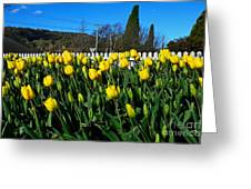 Yellow Tulips Before White Picket Fence Greeting Card