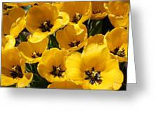 Golden Tulips In Full Bloom Greeting Card