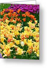 Yellow Tulips In Bloom Greeting Card