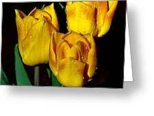 Yellow Tulips On Black Greeting Card