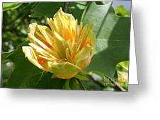Yellow Tuliptree Flower Greeting Card