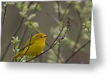 Yellow Warbler -1 Greeting Card