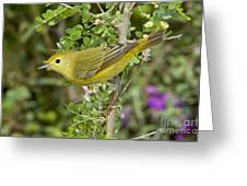 Yellow Warbler Hen Greeting Card
