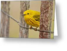 Yellow Warbler Pictures 90 Greeting Card