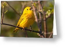 Yellow Warbler Singing Greeting Card