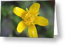 Yellow Weed Flower Greeting Card
