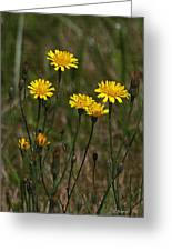 Yellow Wild Flowers Along The Chehalis Trail Greeting Card