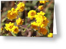 Yellow Wild Flowers Greeting Card