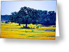 Yellow Wildflowers After Sunrise Greeting Card