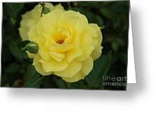 Yellow Wonder Rose...   # Greeting Card