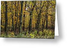 Yellow Woods On A Rainy Day Greeting Card