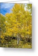 Yellows Of Fall Greeting Card