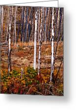 Yellowstone Aspens Greeting Card