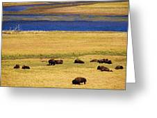 Yellowstone Bison Herd Greeting Card