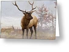 Yellowstone Bull Elk Greeting Card