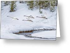 Yellowstone Geese Fly By Greeting Card by David Yack