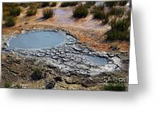 Yellowstone Geyser Greeting Card