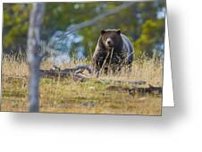 Yellowstone Grizzly Coming Over Hill Greeting Card