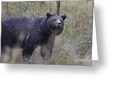 Yellowstone Grizzly Greeting Card