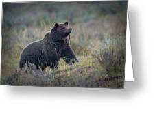 Yellowstone Grizzly On The Lookout Greeting Card