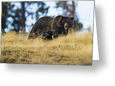 Yellowstone Grizzly Showing Teeth Greeting Card