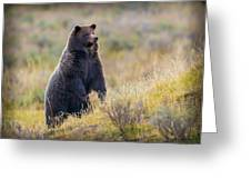 Yellowstone Grizzly Standing - 1 Greeting Card