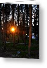 Yellowstone - Sunset Through The Trees Greeting Card