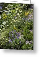 Yellowstone Wildflowers Greeting Card