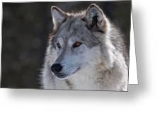 Yellowstone Wolf Greeting Card