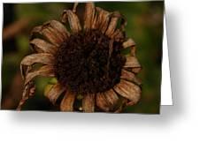 Yesterday's Blackeye Susan 2 Greeting Card