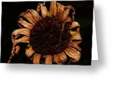 Yesterday's Blackeye Susan Greeting Card