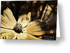 Yesterday's Flower Greeting Card