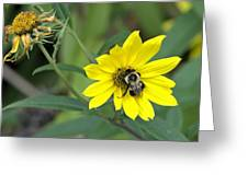 Yet Another Bee On A Flower ... A Yellow Flower This Time Greeting Card