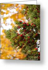 Taxus Baccata Or Yew Red Fruits On Twig  Greeting Card