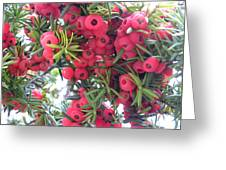 Yewberries Greeting Card