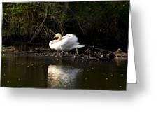 Yogi Swan Greeting Card