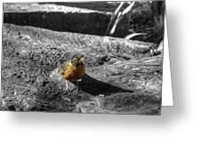 Young Bird Exploring Greeting Card