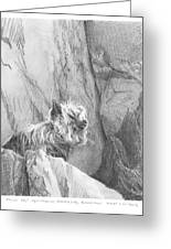 Yorkie Dog On A Cliff Pencil Portrait Greeting Card
