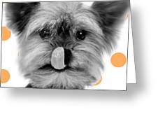 Yorkshire Terrier Dog Greeting Card