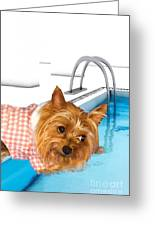 Yorkshire Terrier - This Is The Life Greeting Card