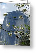 Yosemite Dogwood And Half Dome Greeting Card