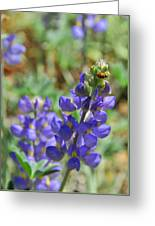 Yosemite Lupine And Ladybug Greeting Card
