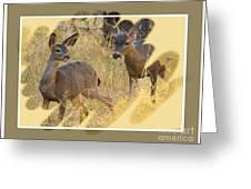 Yosemite National Park - Deer Greeting Card