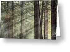 Yosemite Pines In Sunlight Greeting Card